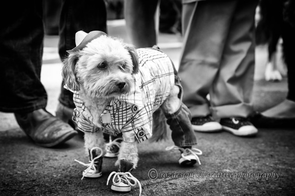 Best Fancy Dressed Pet