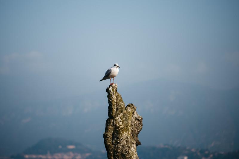 Lake Com &  Lake Lugano Adventure-345.jpg