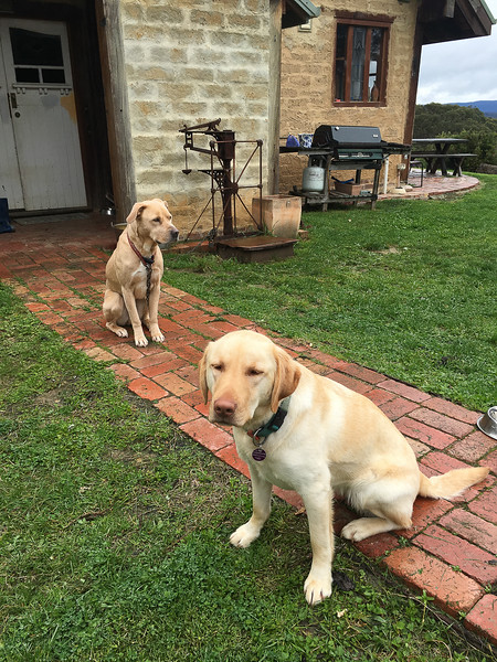 Leo and Tilly from the first house we lived in Smiths Gully near Melbourne