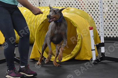 TMAC AKC Agility Trial, August 4-5, 2018