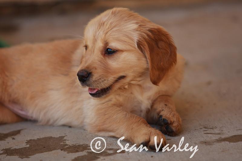 2011.04.16 Daisy 0105.jpg
