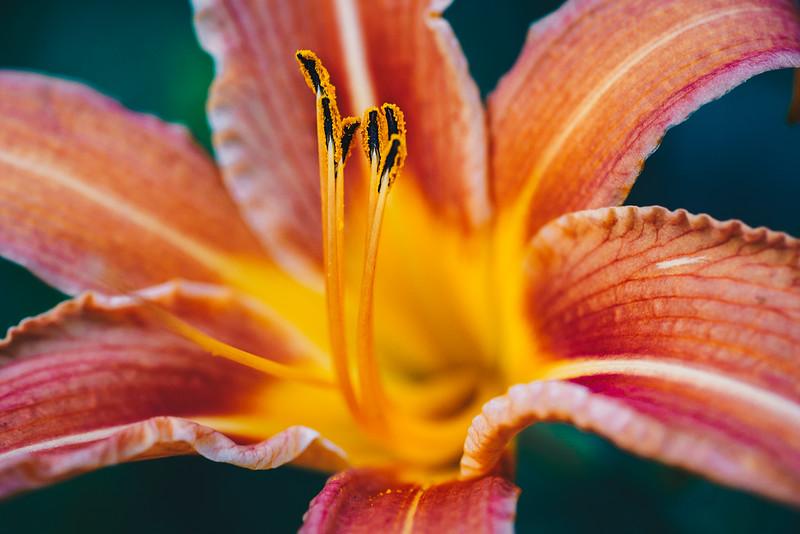 20180607-flowers ryard-5.jpg