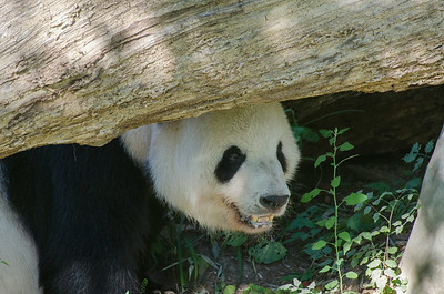 Zoo Monday, August 25, 2014