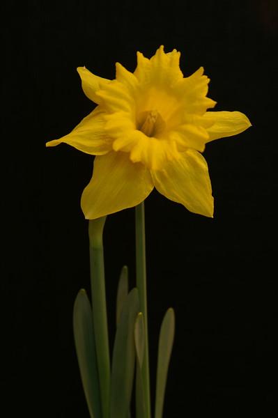 Yel Flower13.jpg