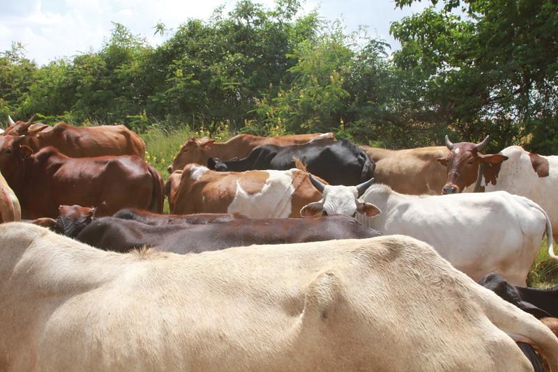 Kenya Part1 '15 2703.JPG