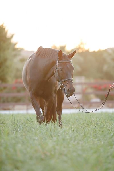 Horses-11.jpg