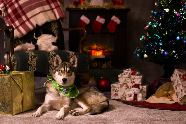 Pawz N Clawz Christmas Pet Photos