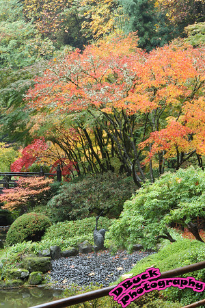 10-30-2009 Portland Japanese Garden
