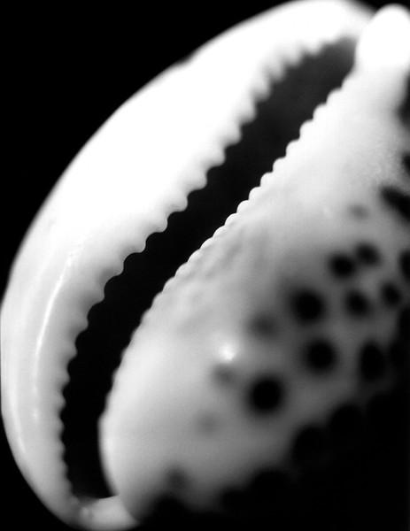sea shell 2.jpg