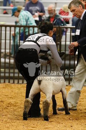 Breeding Lambs