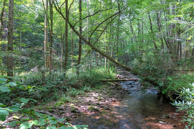 Big Creek Trail (Lower), Henderson County (8-17-19)