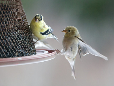 Birds April 2014