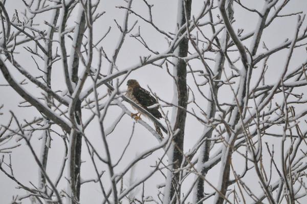 Snow Storm #2 - 2.26.2013