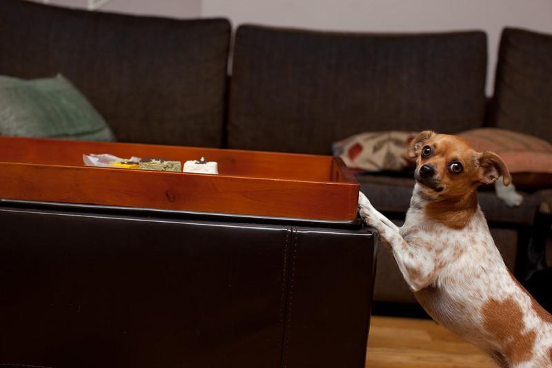 Dog-sushi-halloween2-24.jpg