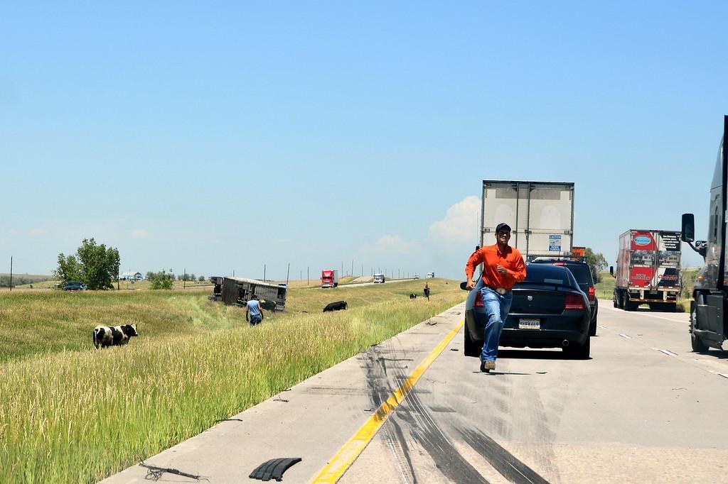 . A semi-trailer hauling cattle rolled on I-70 east of Denver. No animals were killed. (Photo courtesy of Clarice Lakota)