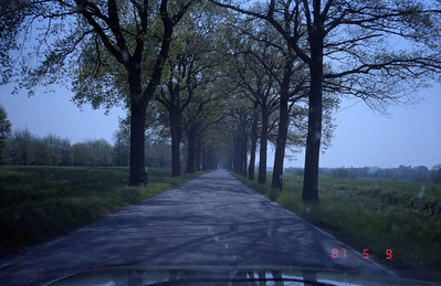 A pleasant country road with stately trees leading the way!