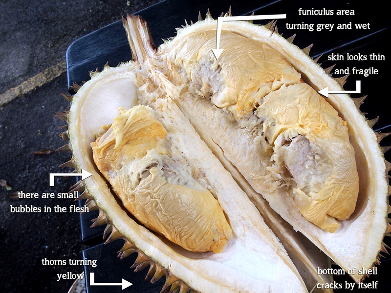 P1010806-how-to-tell-bad-durian-1000px.jpg