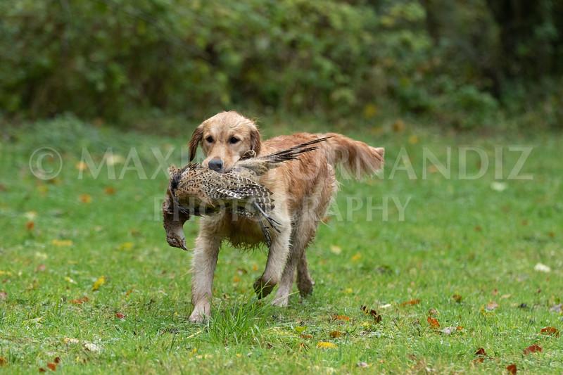 Dogs-4704.jpg