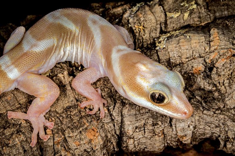 Frogs14jan17-4389.jpg