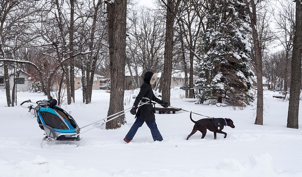 Marianne Meen goes for a walk with her Chocolate Lab named Snowy, and her daughter Isabelle Thursday December 8, 2016. (David Lipnowski for Metro News)