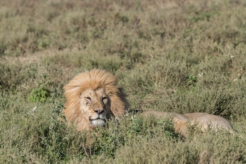 Tanzania_Feb_2018-486.jpg