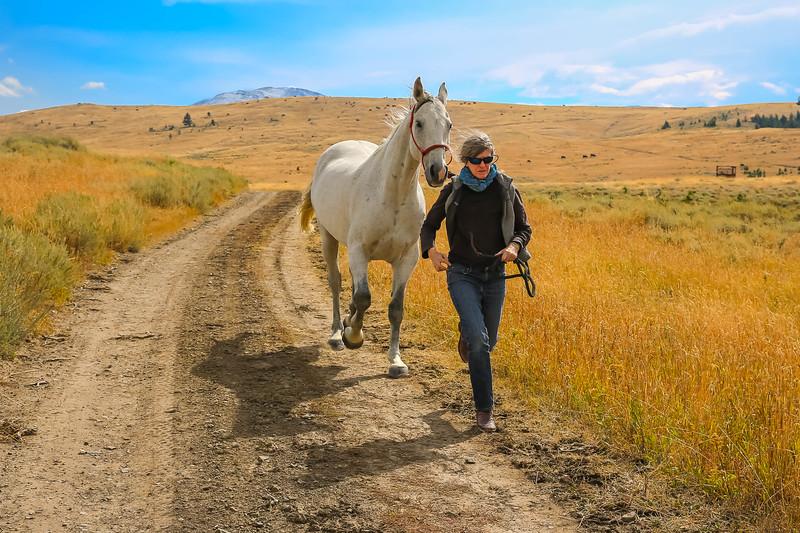 Horses 24.jpg