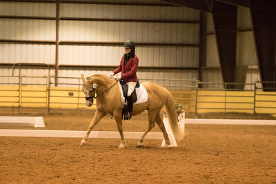 Horse 636