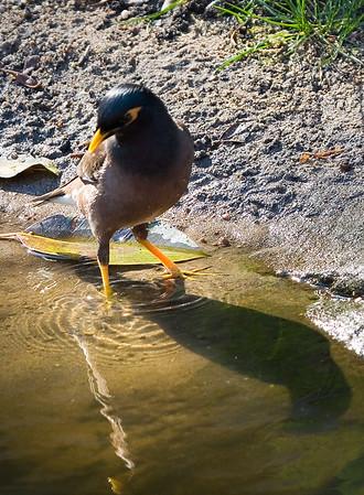 Birds from Down Under