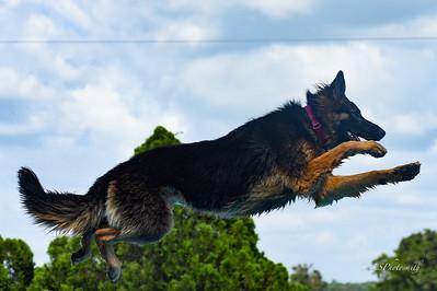 Ocala  Dog Ranch Splash 1 Saturday