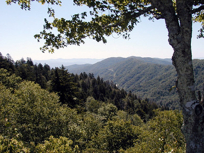 Great Smoky Mountains - June 2003
