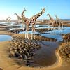 2018-01-05 - Bergen aan Zee plassen op strand Giraffen - Joke_KS - Vk