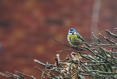 Birdwatch2021