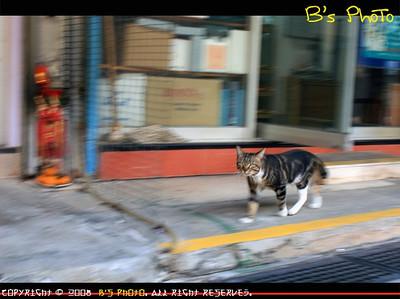 20080105 - Nga Tsin Wai