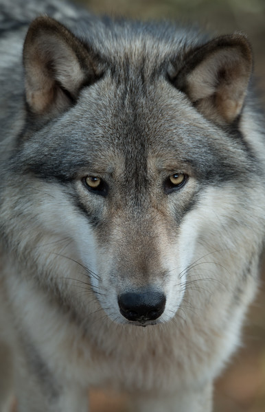 Seacrest Wolves_-61.jpg