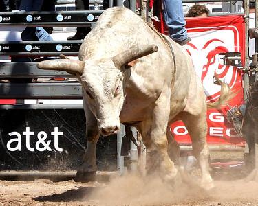 Rodeo Livestock