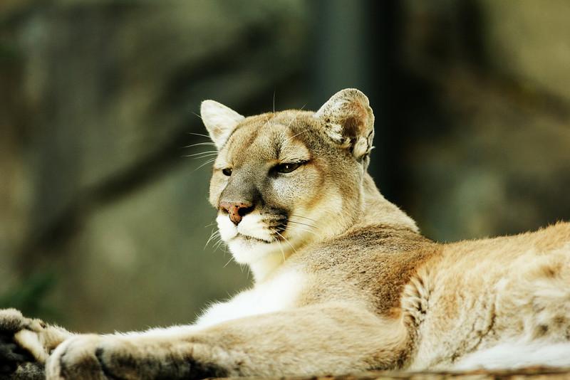 Philadelphia Zoo 649.jpg