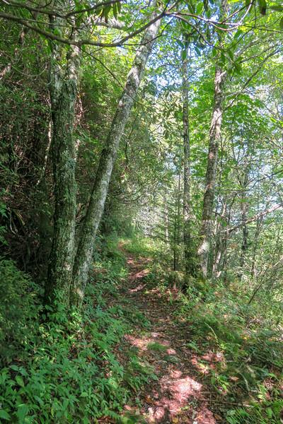 Fork Mountain Trail -- 5,650'