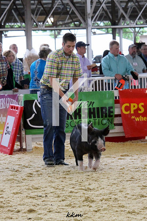 2013 EXPO - Team Purebred ring .... day 2