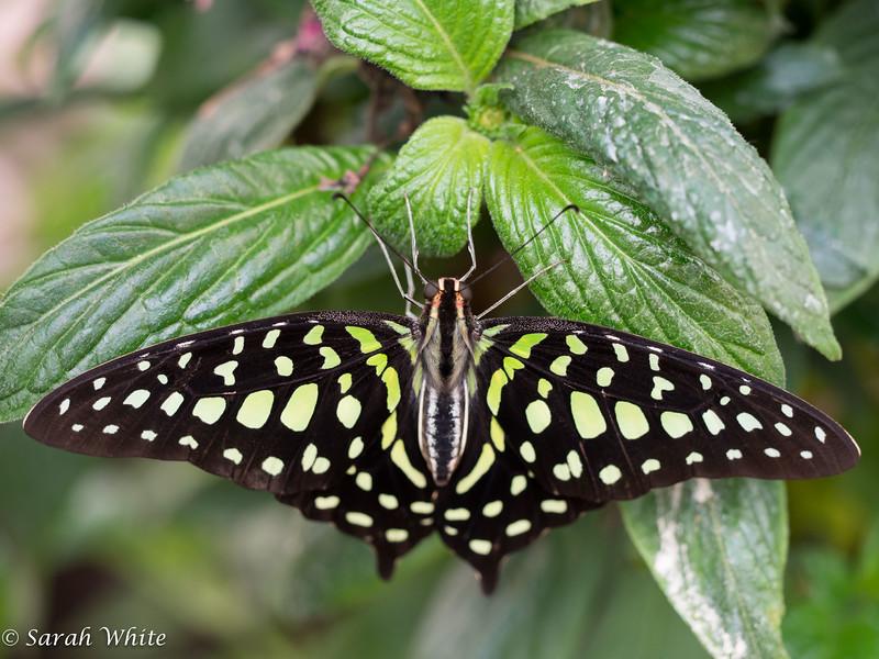 140503_ButterflyHouse_289.jpg