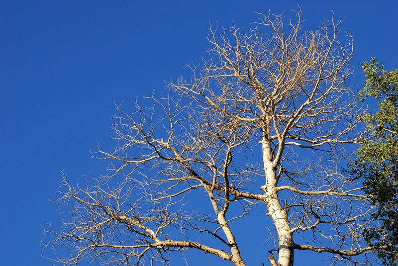 8/6/07 - I was attracted to this barren tree because of the deep blue sky. I found the contrast of the tree against the sky interesting.