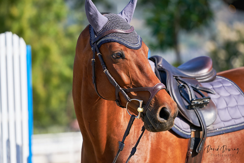Yulia and Farina Equestrian_Dewing (4).jpg