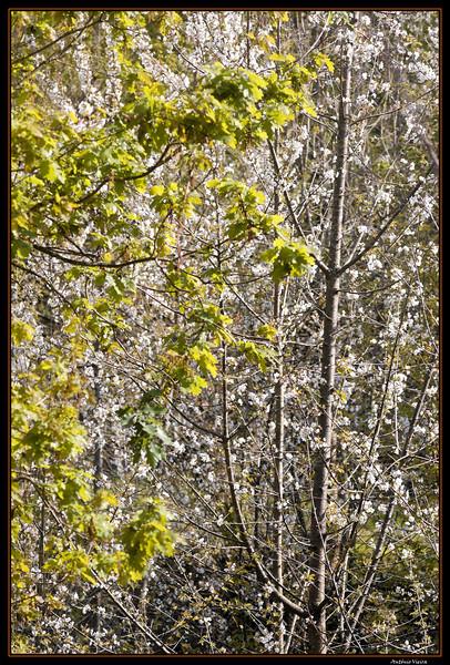 Vouga - 29-03-2008 - 5602.jpg