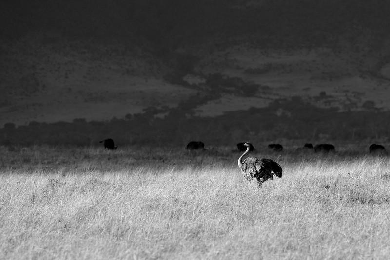 Ostrich-Scape.jpg