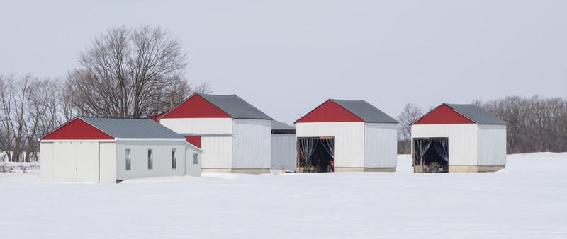 Strawberry farm near Paris Ontario