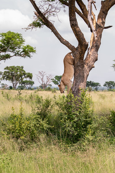 Uganda_T_QE-1544.jpg