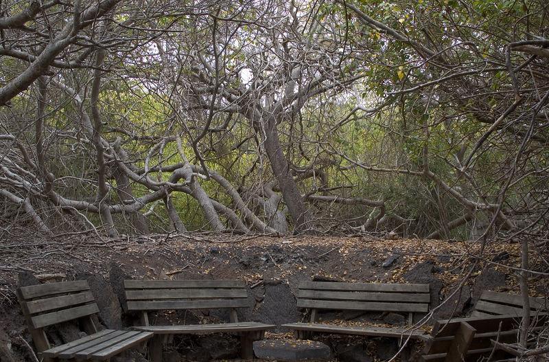 Rest area along the Isabela Island nature trail   (Dec 10, 2005, 12:12pm)