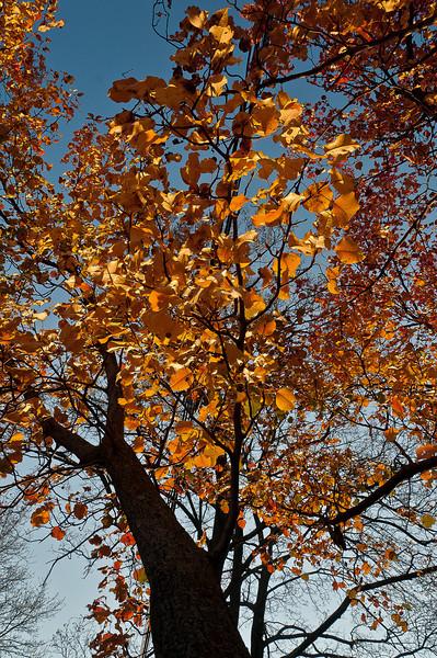 fall05.jpg