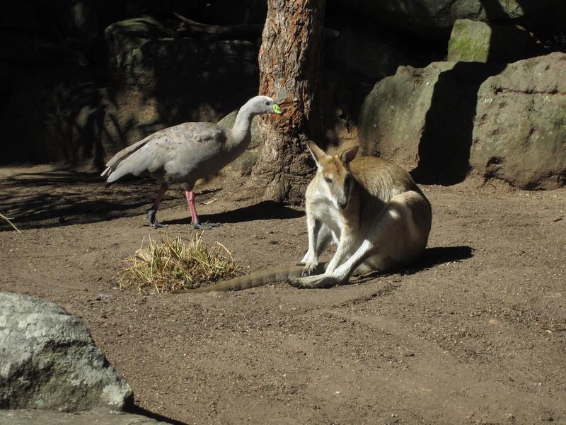Sydney - Sydeny Zoo-61.JPG