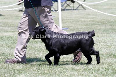 Friday - Veteran Dog