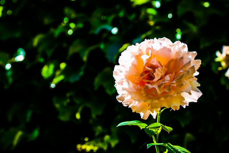 © Gloss Photography Studios-625.jpg